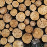 Scotland to host new Forestry Expo