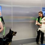 Airport uses sniffer dogs to detect Covid