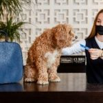 Hilton launches new menu for deserving dogs who have supported owners through the pandemic